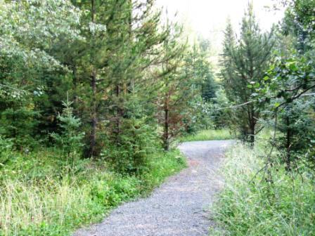 Pioneer trail 4